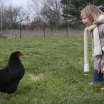 On a expliqué à la poule qu'elle devait pondre